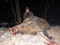 Wildschweinjagd Top Angebot bis 31.7.2020!